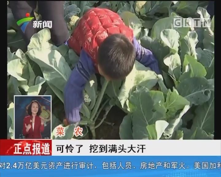 佛山:亲子体验农事亲近大自然