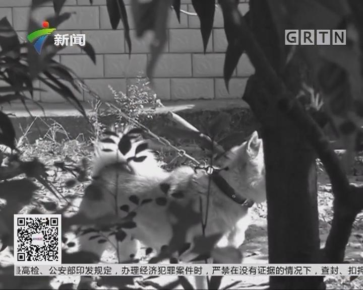 惠州:嚣张盗狗贼 盗狗还打人