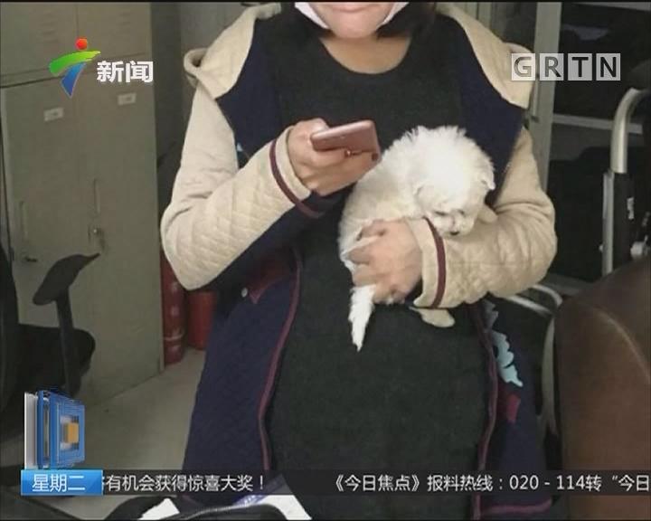 湖北:大学生扮孕妇 假肚子藏小狗坐飞机