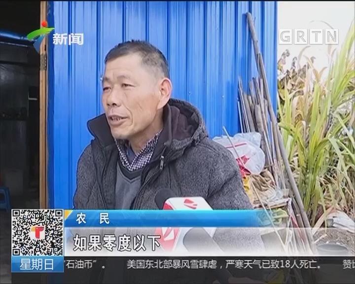 韶关:冷空气到来 农作物受影响