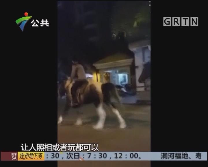 江门:两男子路上潇洒骑马 街坊质疑能否上路