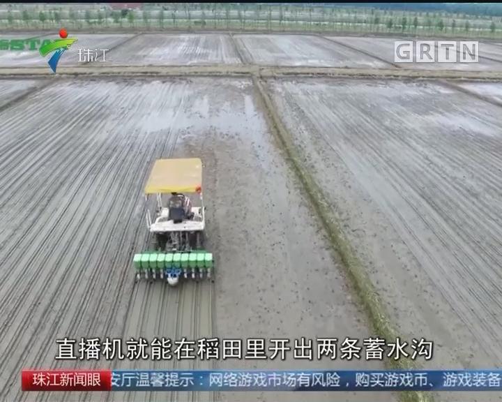 广东:首创水稻成行成穴种植新模式