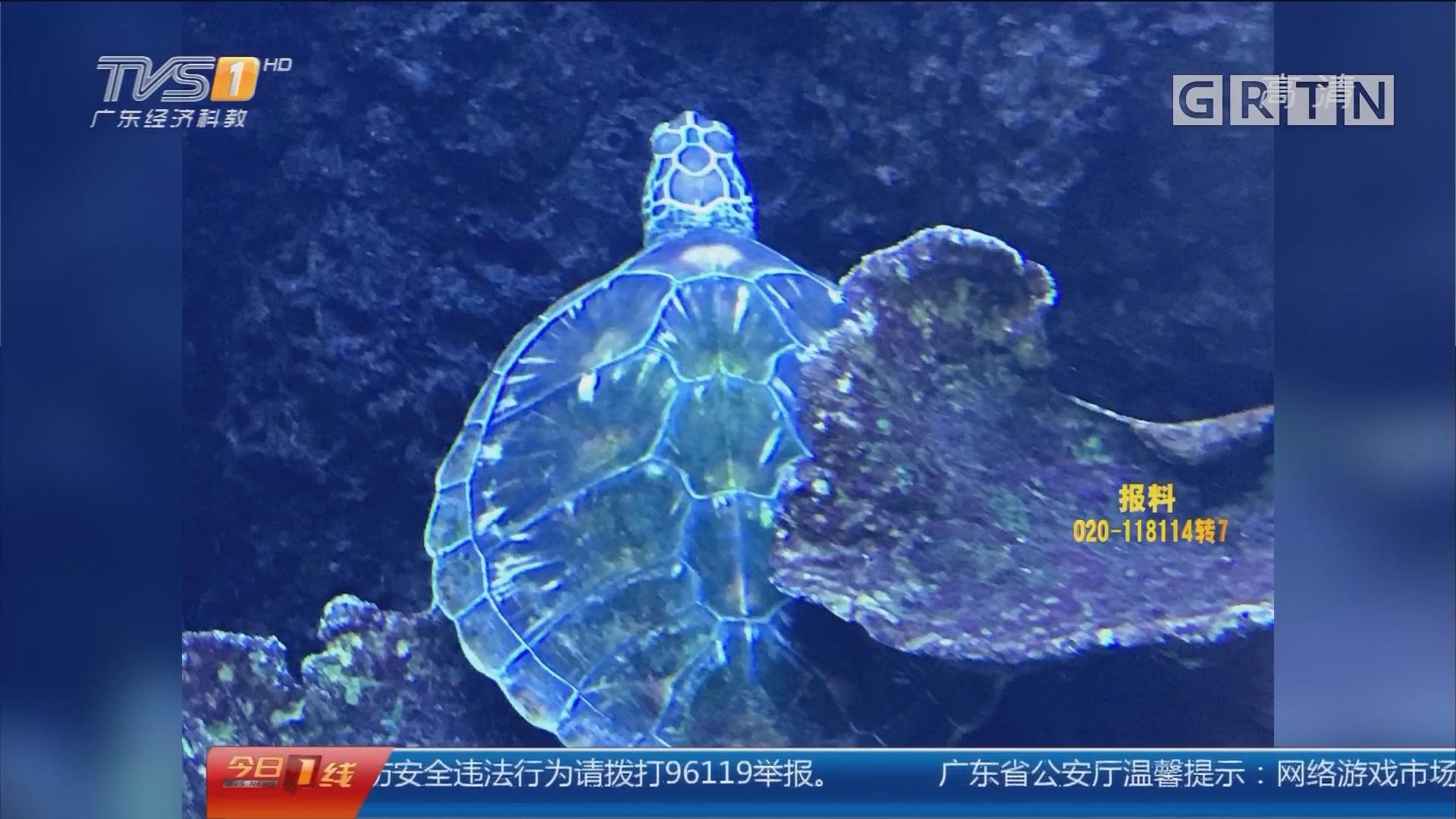 佛山:酒店养了两只龟 被罚款三万六