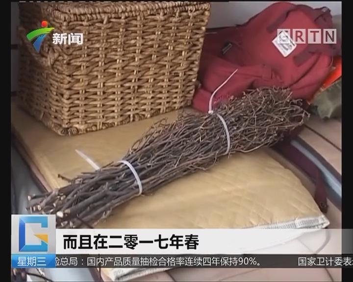保护环境:千枝杜鹃成网红 大肆售卖生态遭破坏