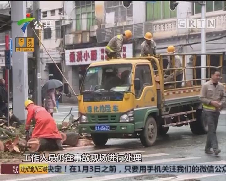 广州:大树倒下 两路人不慎被砸中
