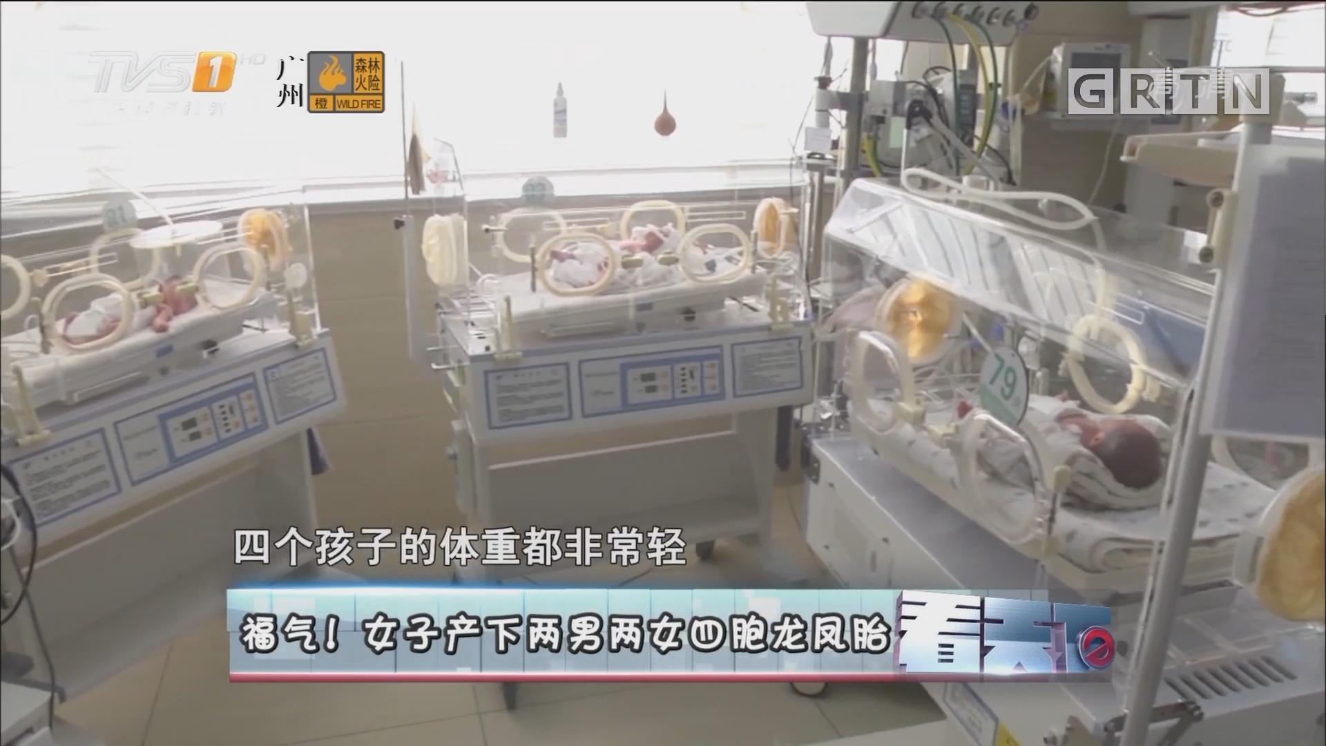 [HD][2018-01-05]看天下:福气!女子产下两男两女四胞龙凤胎
