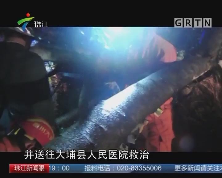 梅州大埔:雨夜大树砸学生 一死一伤