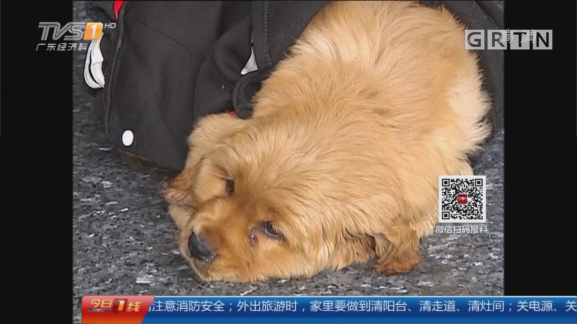宠物狗:买来宠物狗 几天内离奇死亡