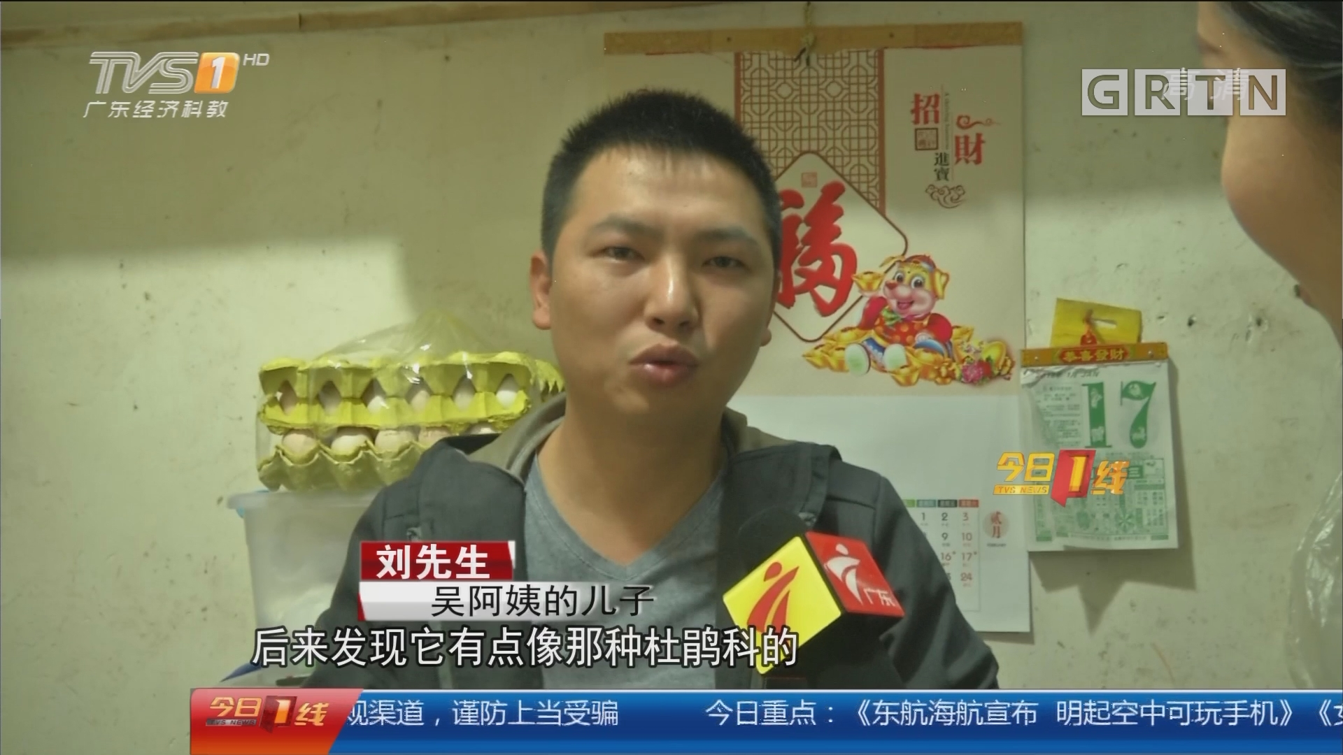 广州:小鸟误入民宅 疑为国家二级保护动物