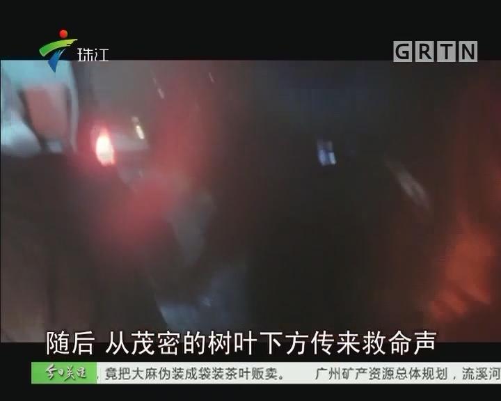 梅州:大树倒下砸中两中学生 造成一死一伤