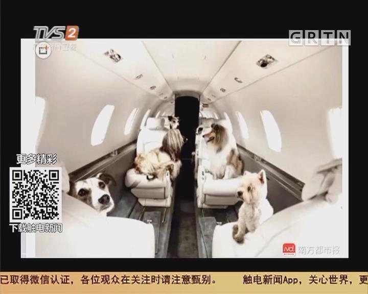 坐飞机可带宠物进客舱,你怎么看?