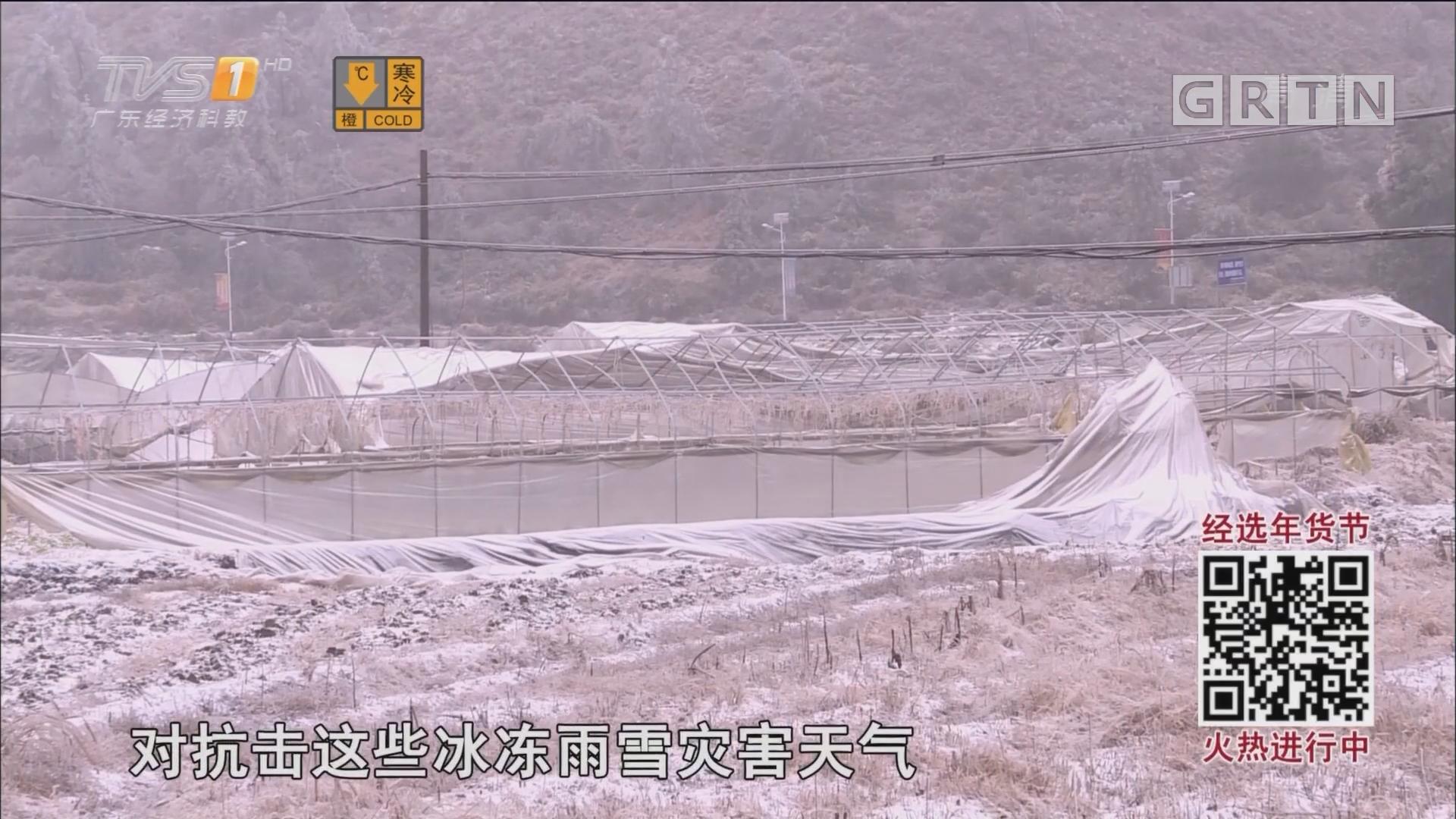 直击寒潮:韶关云岩镇冰雪受灾人口过万