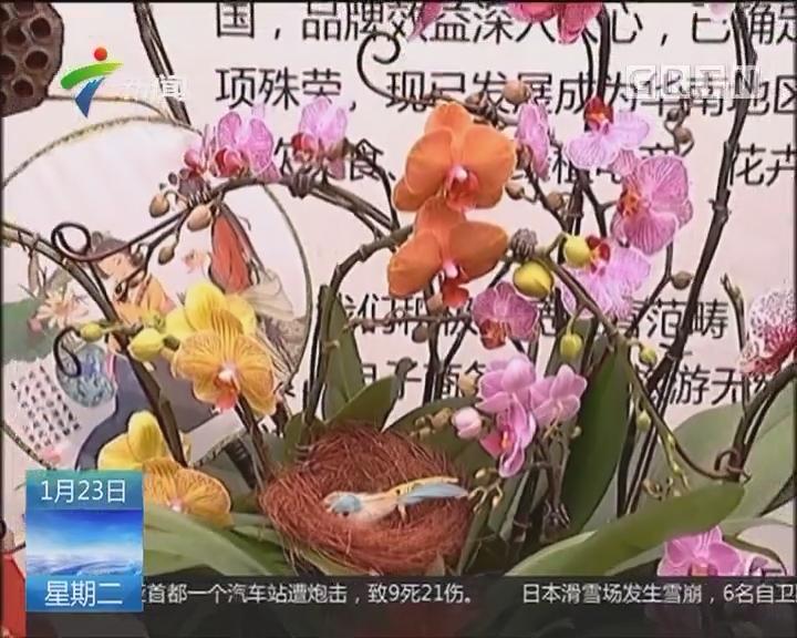 佛山:迎春花开 蝴蝶兰成抢手货
