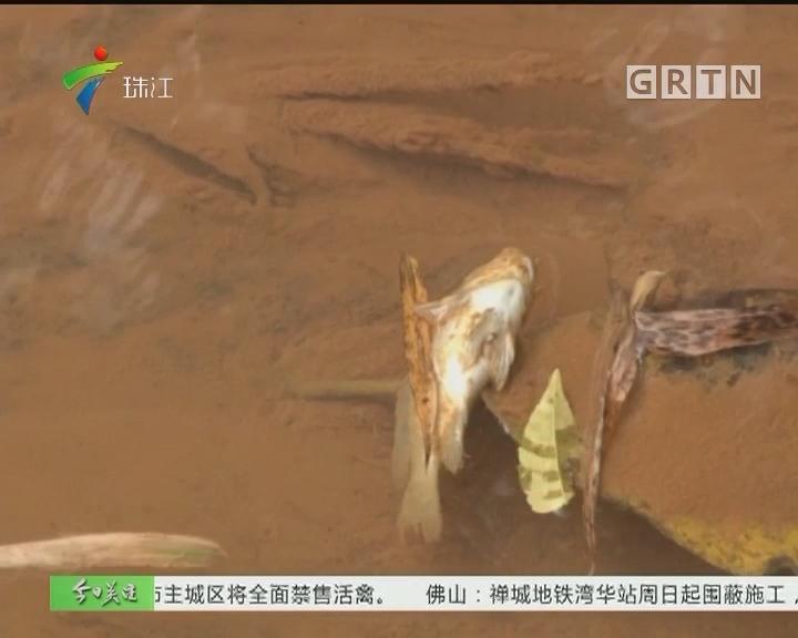 清远:工厂原料泄漏 清水变成红河