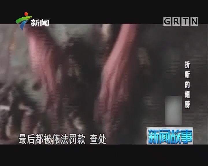 [2018-01-09]新闻故事:折断的翅膀