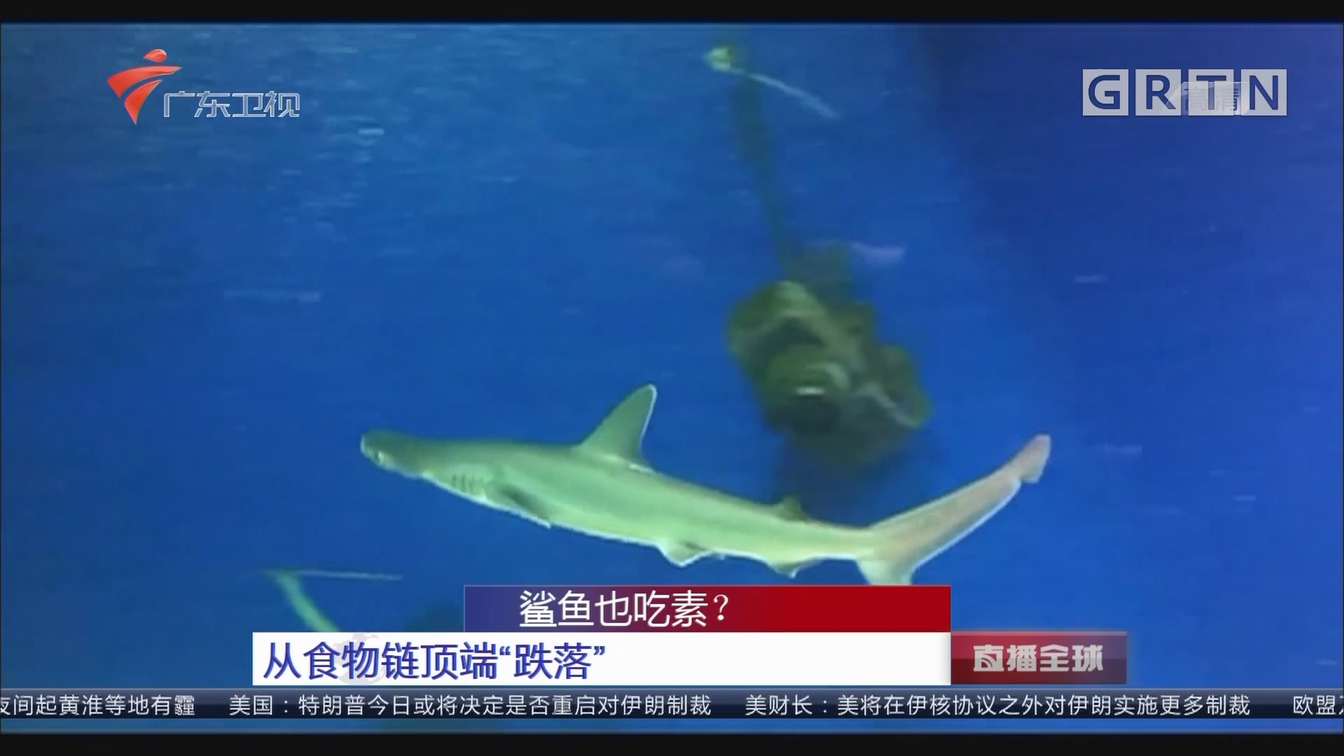 """鲨鱼也吃素?从食物链顶端""""跌落"""""""