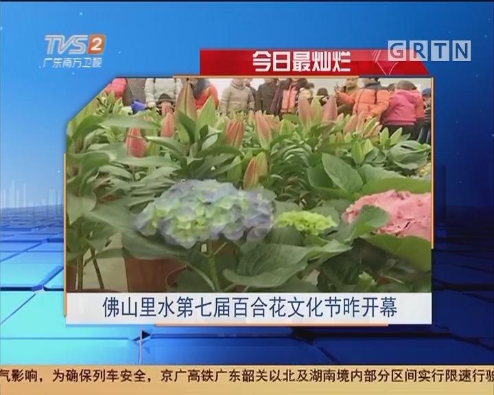 今日最灿烂:佛山里水第七届百合花文化节昨开幕