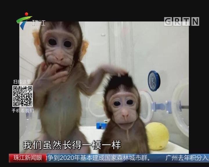 世界首例克隆猴诞生