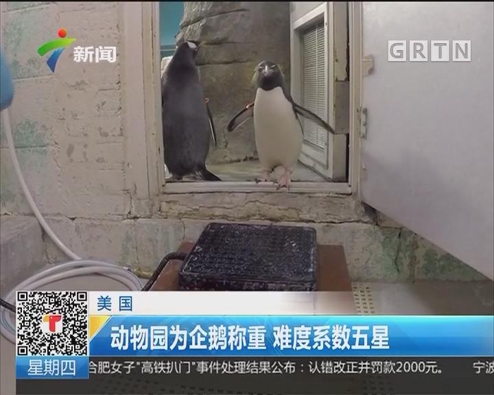 美国:动物园为企鹅称重 难度系数五星
