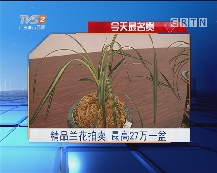 今天最名贵:精品兰花拍卖 最高27万一盆