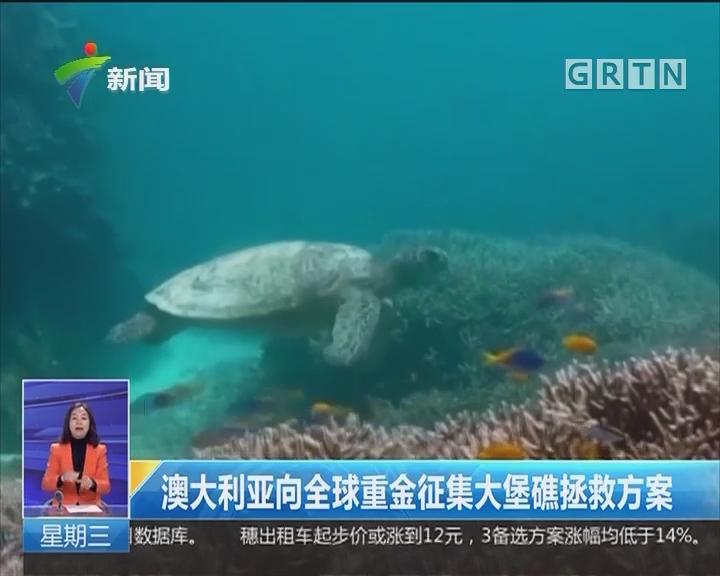 澳大利亚向全球重金征集大堡礁拯救方案
