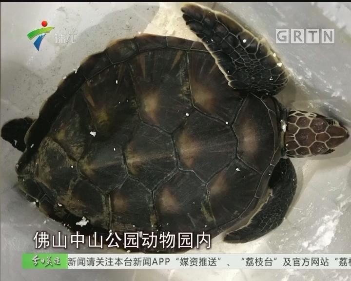 佛山:酒店养龟被重罚3.6万 为何?