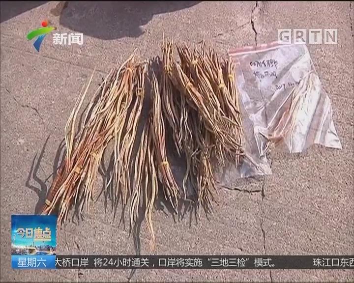 """佛山高明:鱼干身价暴涨150倍 成""""滋补佳品""""?"""