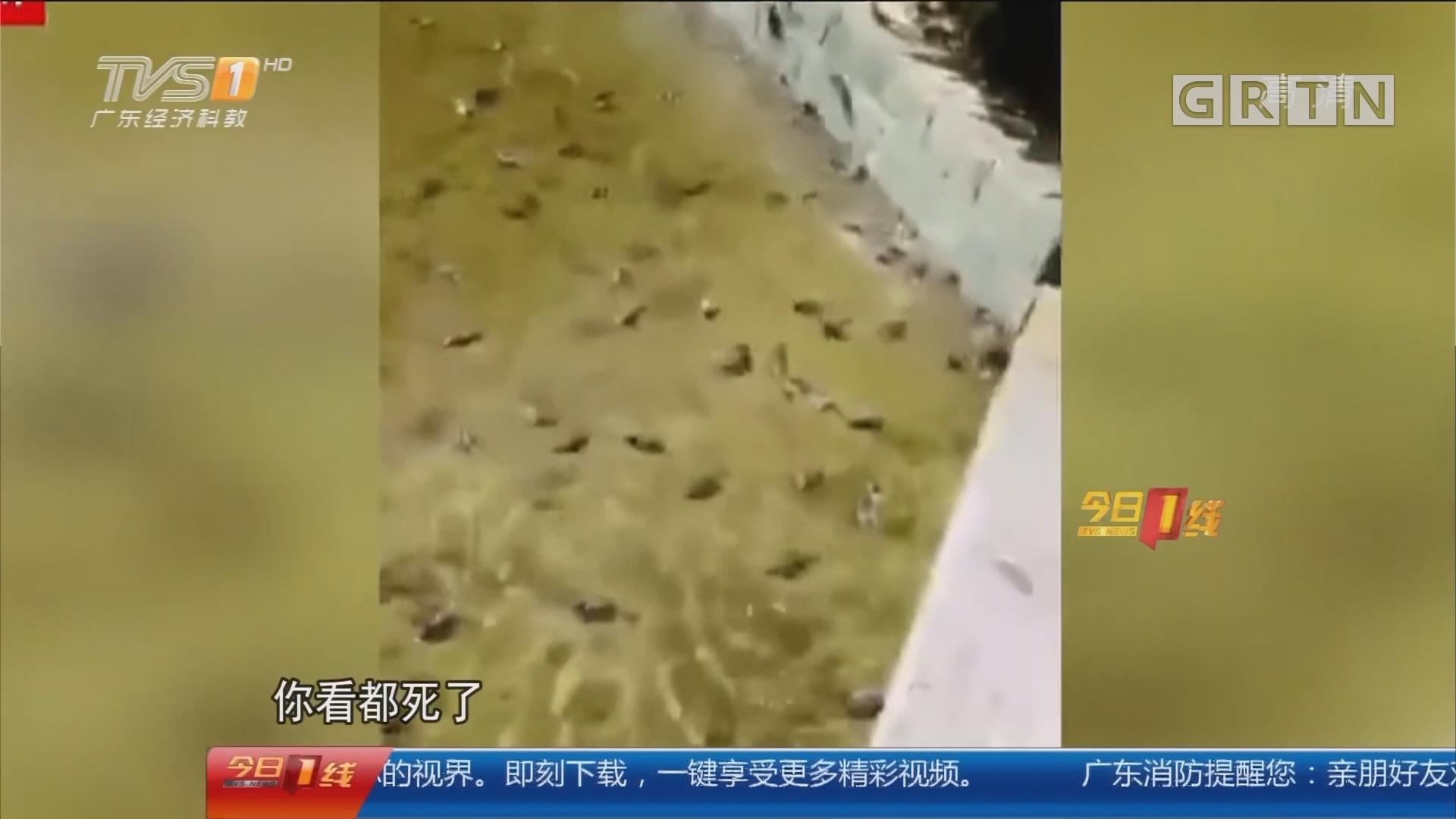 广州大学城:蹊跷!几十只麻雀落水死亡