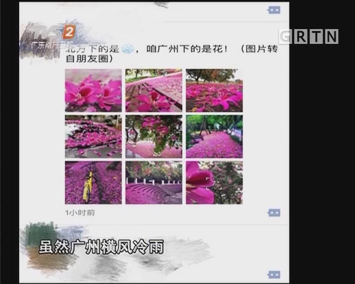 紫荆花雨刷爆朋友圈