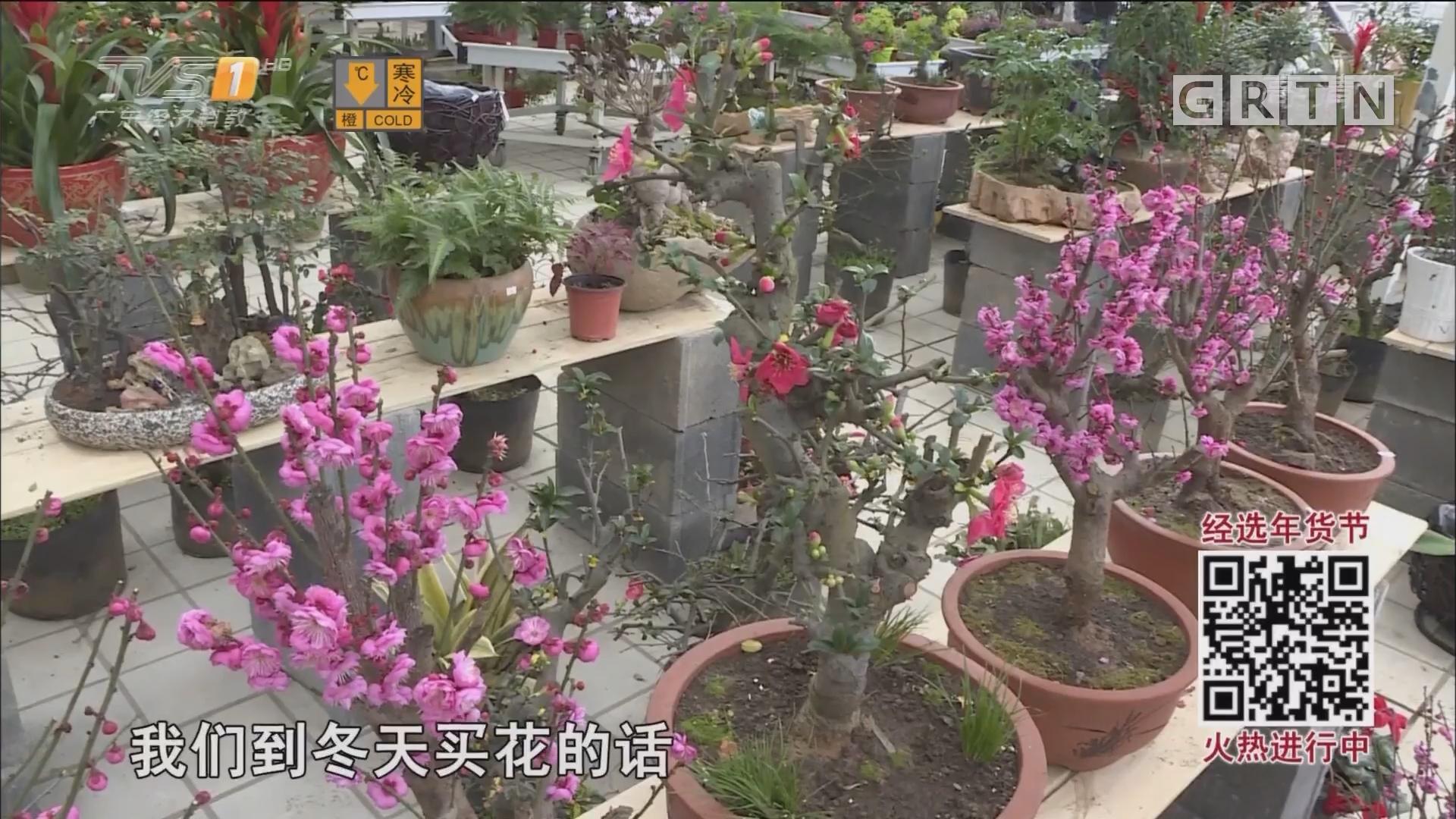 春节临近盆景热销 注意宁干勿湿