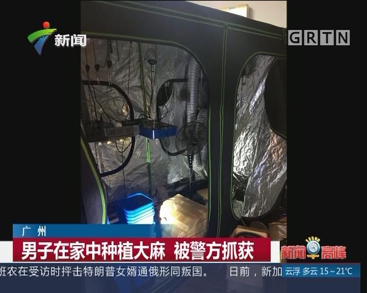 广州:男子在家中种植大麻 被警方抓获