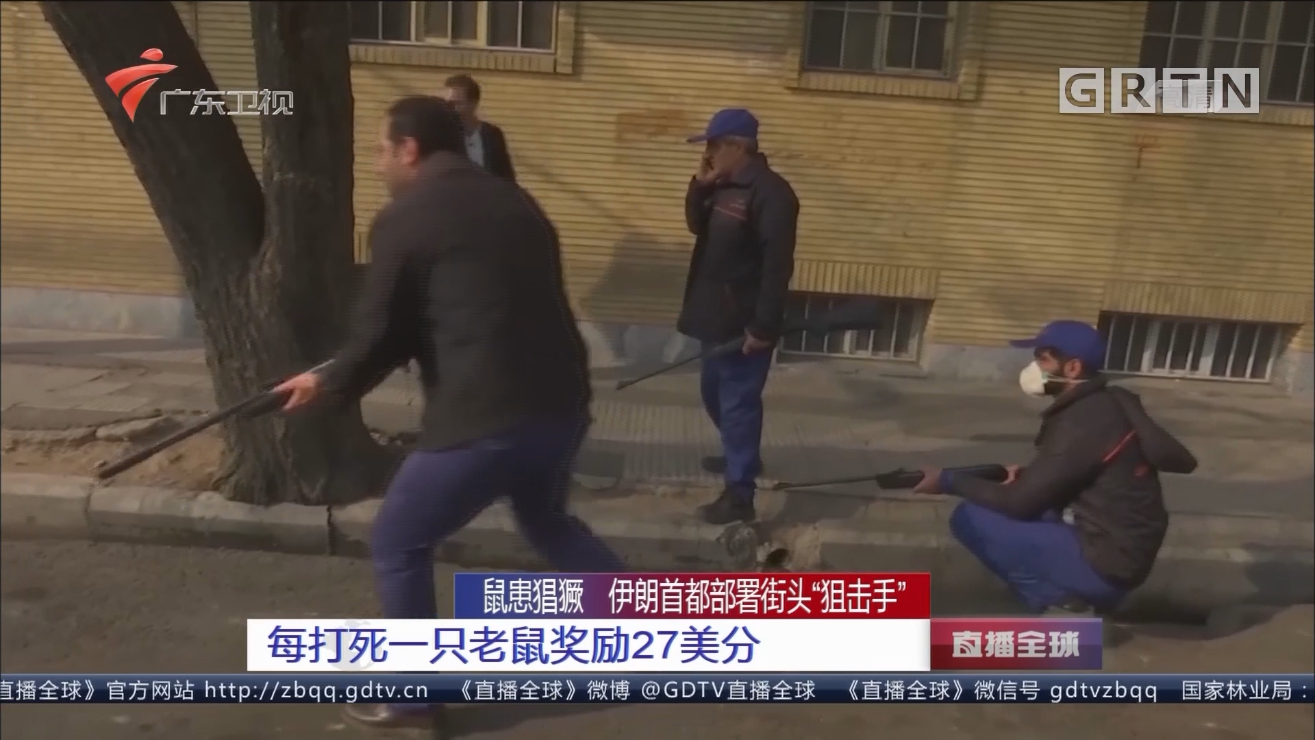 """鼠患猖獗 伊朗首都部署街头""""狙击手"""" 每打死一只老鼠奖励27美分"""