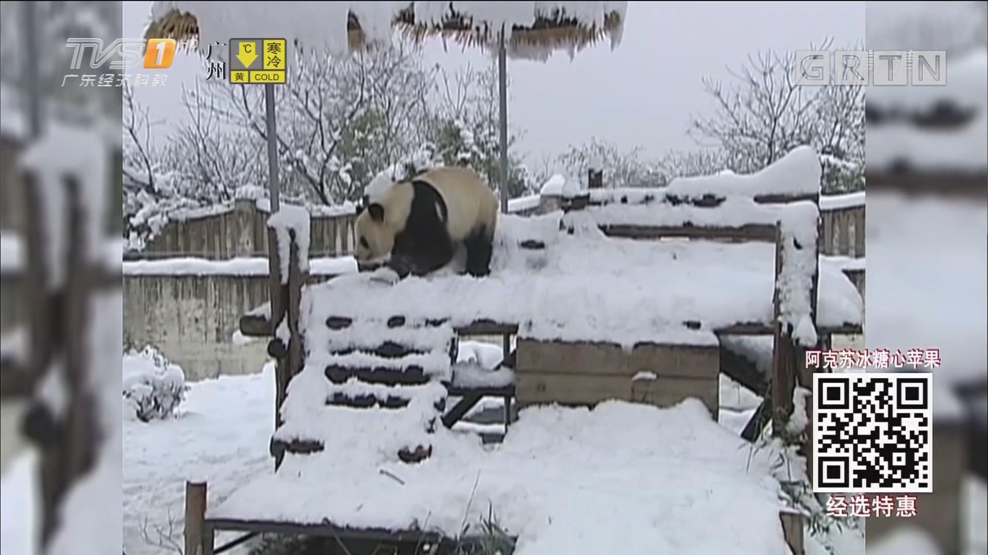 室外天寒地冻 动物过冬 各显神通