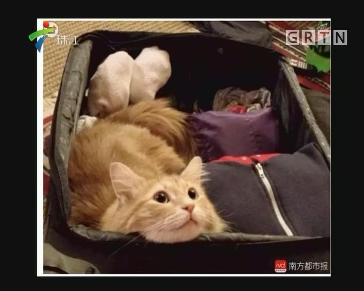 宠物进飞机舱你怎么看
