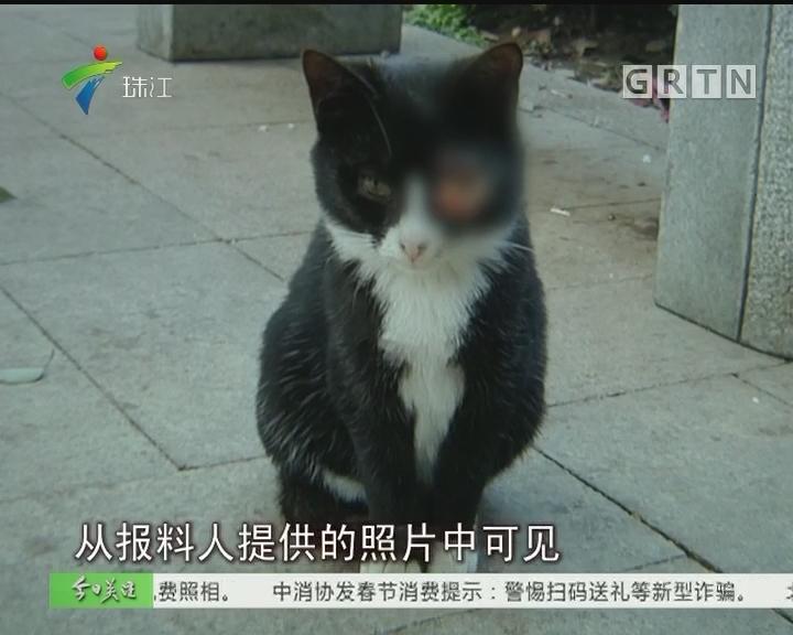 虐心!广州:东山湖公园多只猫眼球丢失