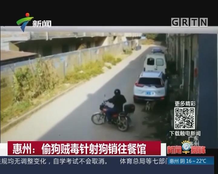 惠州:偷狗贼毒针射狗销往餐馆
