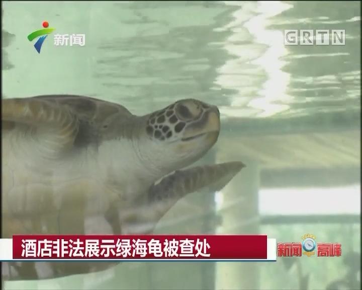 酒店非法展示绿海龟被查处
