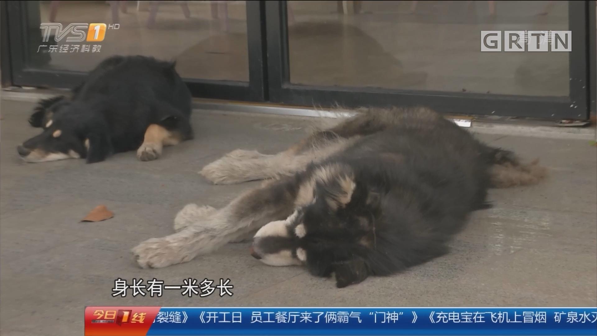 """广州增城:开工日 员工餐厅来了俩霸气""""门神"""""""