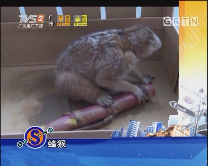 小蜂猴闯入派出所觅食取暖