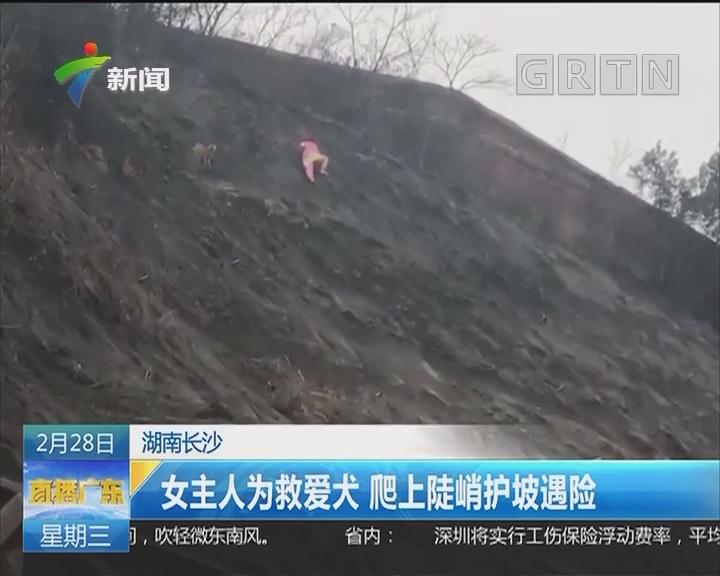 湖南长沙:女主人为救爱犬 爬上陡峭护坡遇险