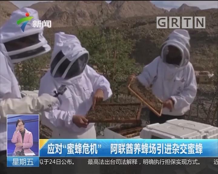 """应对""""蜜蜂危机"""" 阿联酋养蜂场引进杂交蜜蜂"""