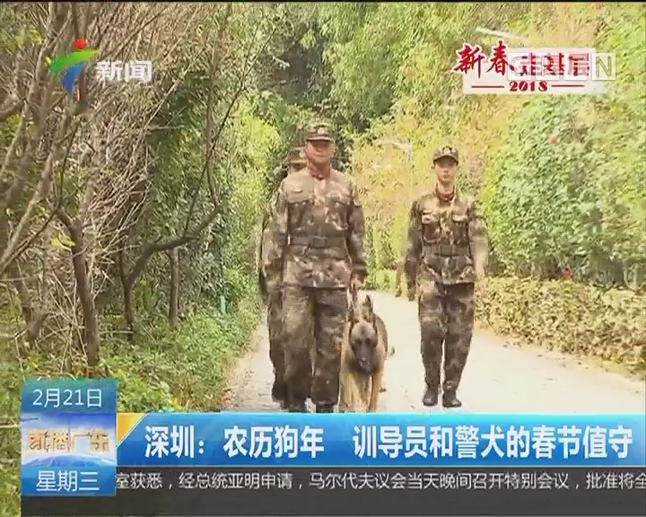 深圳:农历狗年 训导员和警犬的春节值守