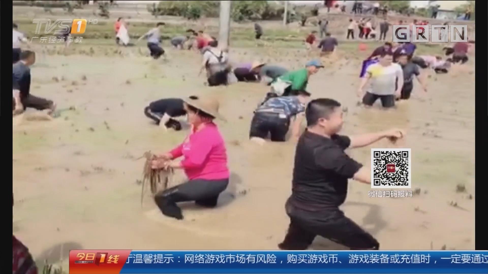 """梅州大埔:""""浑水摸鱼""""欢乐多 喜庆过新春"""