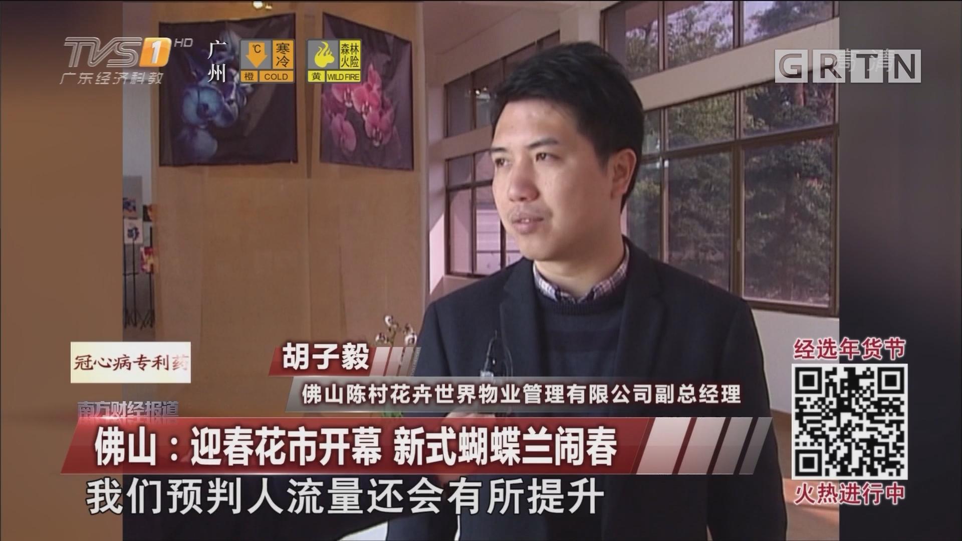 佛山:迎春花市开幕 新式蝴蝶兰闹春