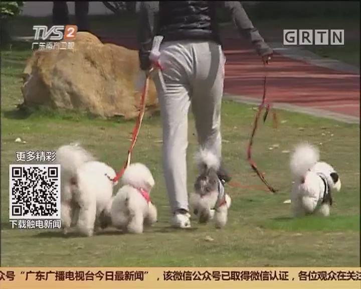 狗年说狗:养犬办只有三个人 谁来抓落实?