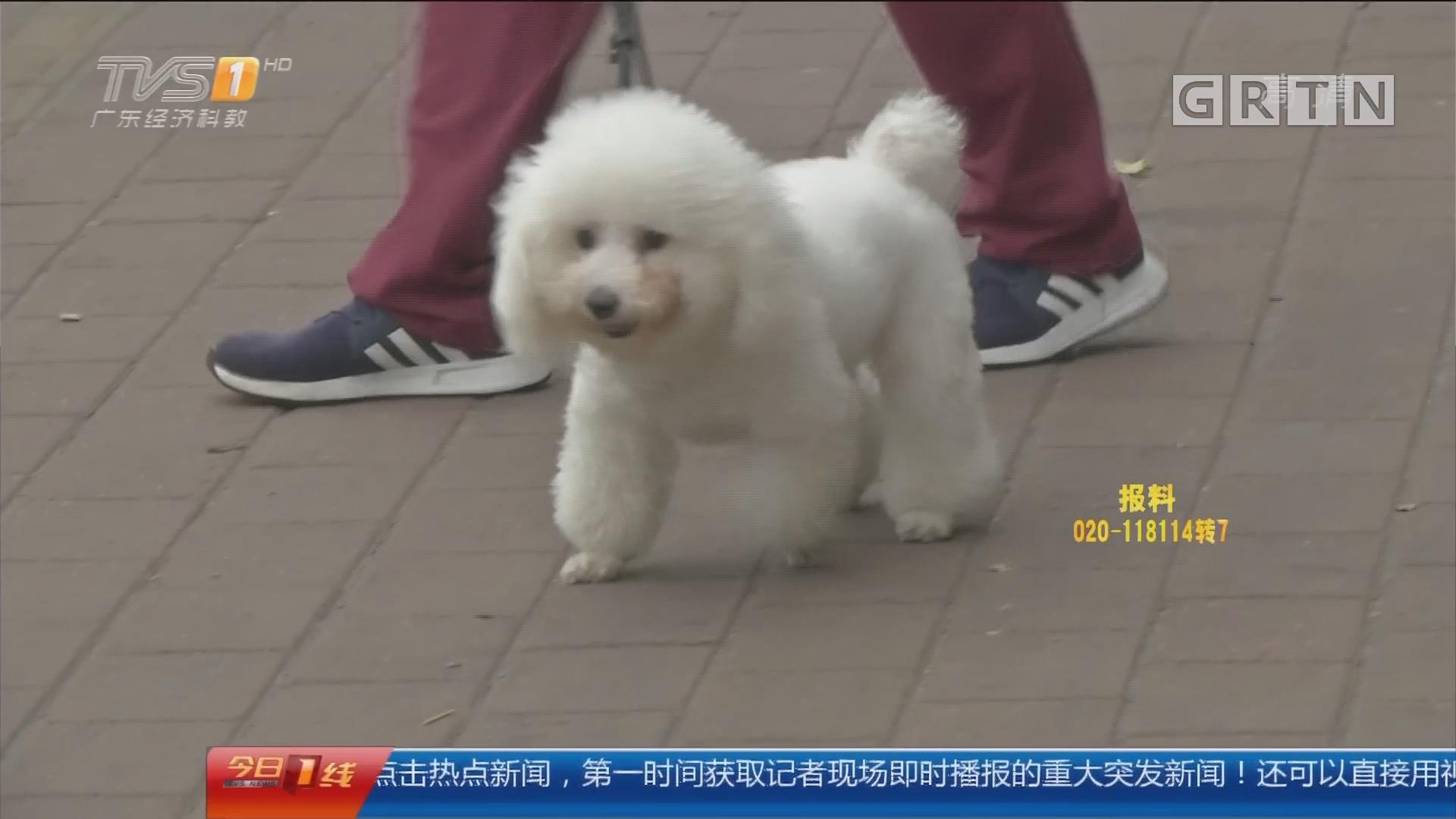 广州:宠物店关门 寄养狗惨变流浪狗?