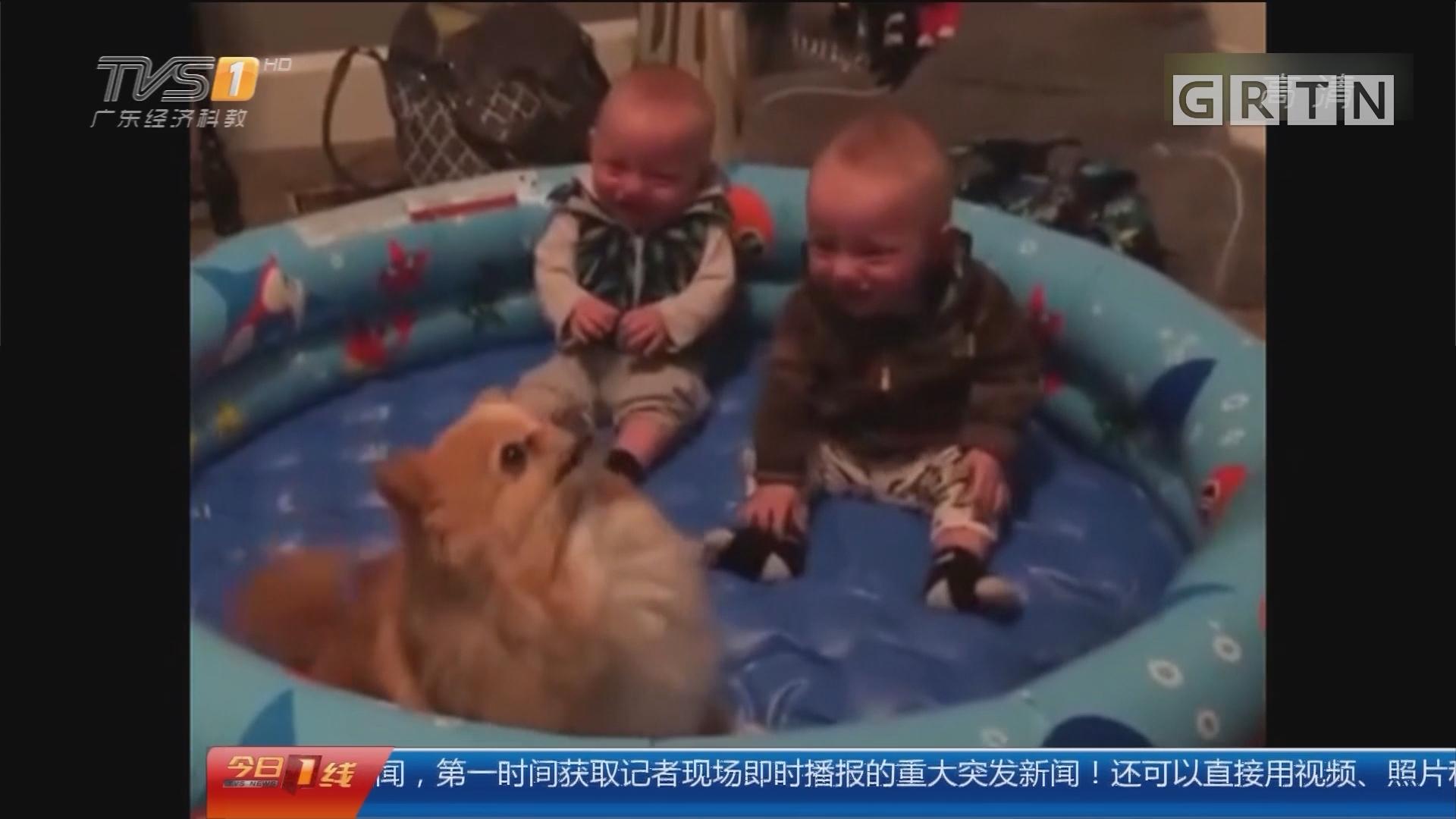 狗年大吉:我家狗狗爱跳舞