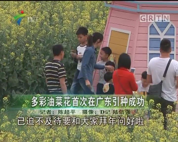 多彩油菜花首次在广东引种成功