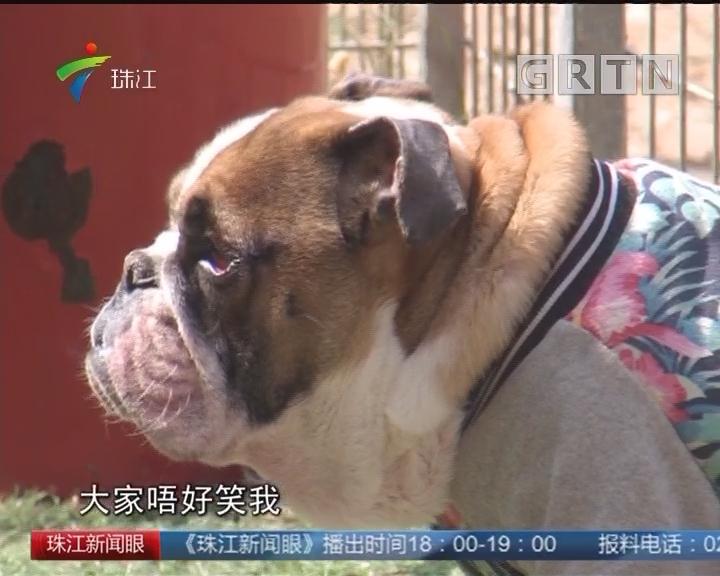 流浪狗狗:我也想要个温暖的家
