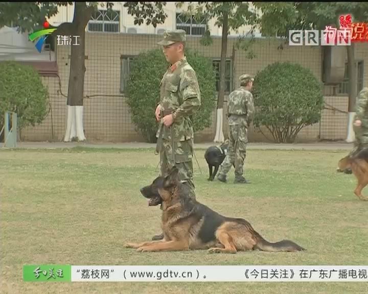 狗年说狗:不靠颜值靠实力 警犬新春来拜年